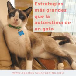 🐶 Pet Marketing | Consultoría PRO