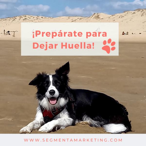 pet marketing campaña online